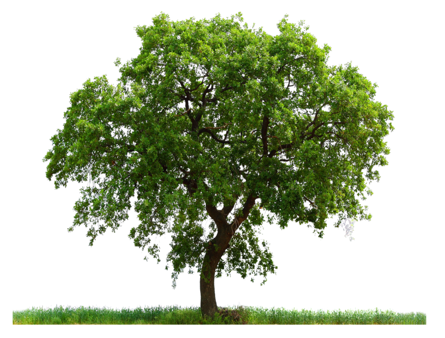 png_tree_ab_by_paradise234-d5gy7ul